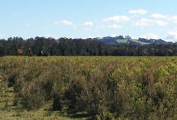 2013ttfarm