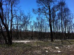 2014bushfire